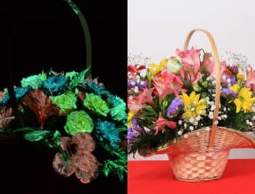 Краска для цветов
