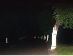 Краска светоотражающая AcmeLight для дерева белая - изображение 2 - интернет-магазин tricolor.com.ua