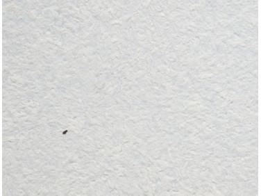 Жидкие обои Юрски Астра 028 голубые