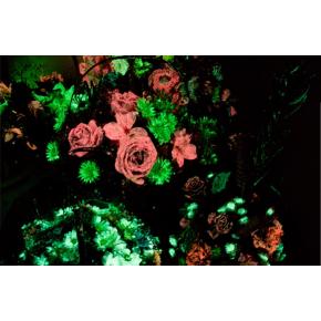 Набор люминесцентных красок для цветов AcmeLight 8 шт - интернет-магазин tricolor.com.ua