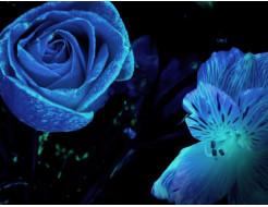 Краска светящаяся AcmeLight для цветов голубая - изображение 2 - интернет-магазин tricolor.com.ua