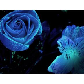 Краска люминесцентная AcmeLight Flower для цветов голубая - изображение 2 - интернет-магазин tricolor.com.ua