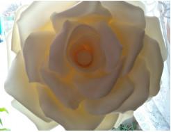 Изолон цветной Izolon Pro 3002 белый (шампань) 1м - изображение 2 - интернет-магазин tricolor.com.ua