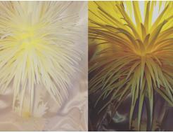 Образцы цветного изолона (Isolon 500, Izolon Pro) - изображение 8 - интернет-магазин tricolor.com.ua