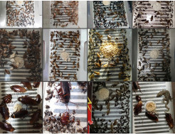 Ловушка для тараканов, прусаков и муравьев повышенной клейкости Killing Bait - изображение 3 - интернет-магазин tricolor.com.ua
