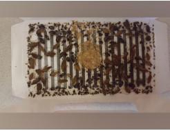Ловушка для тараканов, прусаков и муравьев повышенной клейкости Killing Bait - изображение 12 - интернет-магазин tricolor.com.ua