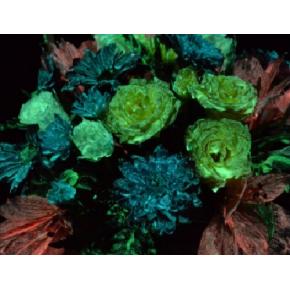 Краска люминесцентная AcmeLight Flower для цветов желтая