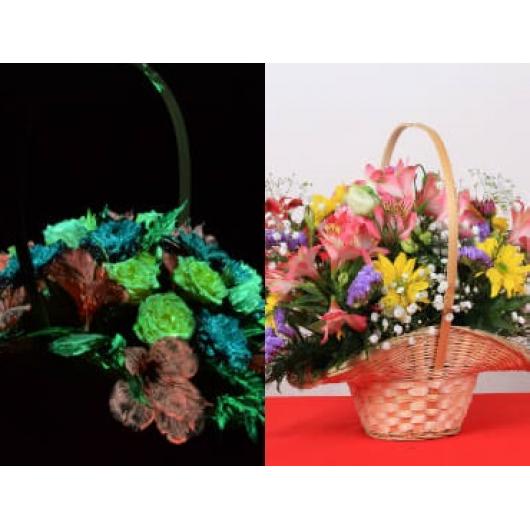Краска люминесцентная AcmeLight Flower для цветов оранжевая - интернет-магазин tricolor.com.ua
