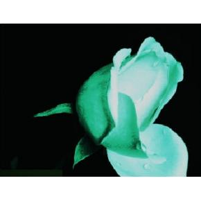 Краска люминесцентная AcmeLight Flower для цветов белая - интернет-магазин tricolor.com.ua