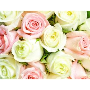Фотообои Lux Design #2 Розы бело-розовые