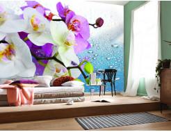Фотообои Lux Design #17 Цветы и роса - изображение 2 - интернет-магазин tricolor.com.ua