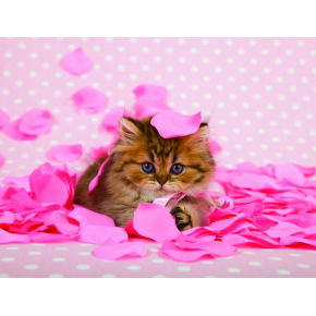 Фотообои Lux Design #23 Котенок - интернет-магазин tricolor.com.ua