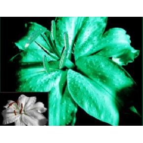 Краска люминесцентная AcmeLight Flower для цветов классик - интернет-магазин tricolor.com.ua